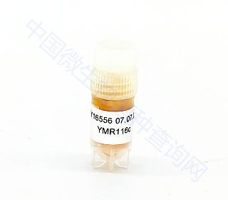 酵母突变体YMR116C ,16556