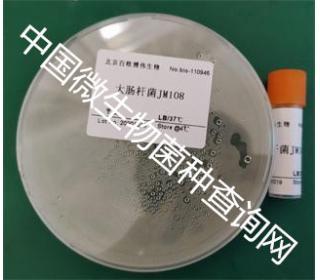 大肠杆菌JM108