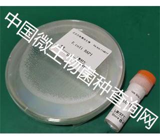 E.coli BAP1