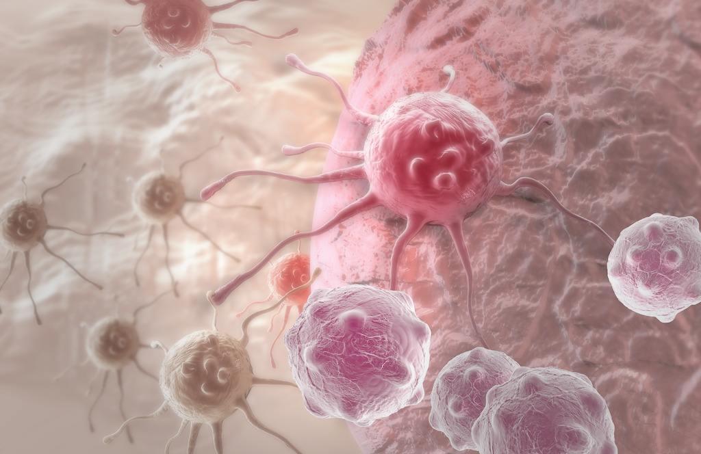 细胞CELL